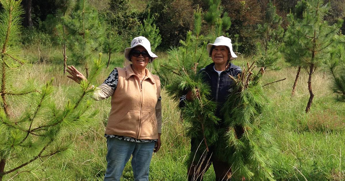 Mujeres en espacios comunitarios:Experiencia desde el Comisariado Ejidal de Huecorio, Michoacán